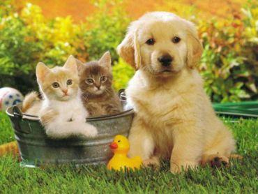 animaux domestiques acceptes